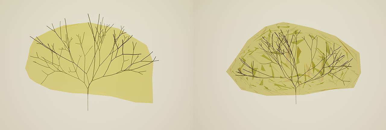 Koruny stromov